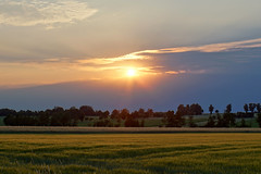 Field in the evening (mechanicalArts) Tags: kornfeld abend sonnenuntergang field evening sunset