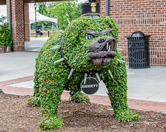 Bulldog Topiary (augphoto) Tags: augphotoimagery bulldog creative outdoors plants sculpture topiary unique unusual greenwood southcarolina unitedstates