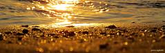 IL MATTINO HA L'ORO IN BOCCA -EXPLORE Jun 14 #190 (piera.seghetti) Tags: san benedetto del tronto pepite