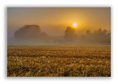 Sunrise (Robbi Metz) Tags: deutschland germany bayern bavaria reischenau landscape trees sunrise fog field sun colors canoneos