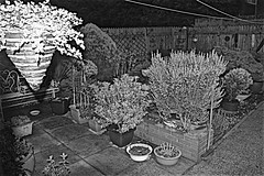 Early Morning 3-34 am Monochrome (brianarchie65) Tags: garden plants earlymorning canoneos600d geotagged brianarchie65 monochrome blackandwhite blackandwhitephotos blackandwhitephoto blackandwhitephotography blackwhite123 flickrunofficial flickruk flickrcentral flickr ukflickr ngc unlimitedphotos