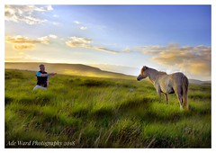 Trust! (awardphotography73) Tags: horselover wildnature breconbeacons beautiful animal cymru wales sunset summer manandbeast wildhorses feedinghorses