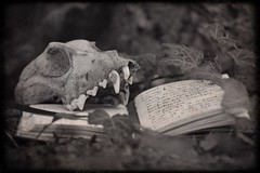 Mysteries of the Forest (sarkanymacska) Tags: words death secret forest diary foxskull