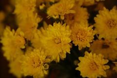 180525011 (murbozero) Tags: murbo japan flower
