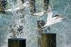 Terns (Bernie Duhamel) Tags: tern shorebird bird splash waves water pier ocean sea sunshine gulfofmexico naples naplesbeach florida sonyfe100400mm sonya9 greatphotographers teamsony bernie duhamel