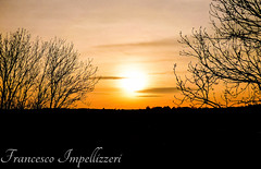 Between the Trees (Francesco Impellizzeri) Tags: brighton england trees sunset panasonic landscape clouds ngc