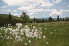 Bivouac Review (all martn) Tags: jizerky jizerske hory isergebirge mtb bikepacking all mountain backcountry