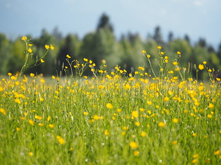 Spring Meadow Edge of the Woods Germany © Frühling Wiese Bayern