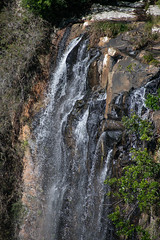 Australia_2018-133.jpg (emmachachere) Tags: subtropical trees hike waterfall boatride springbrook australia rainforest kanagroo animals koala brisbane boat lonepinekoalasanctuary