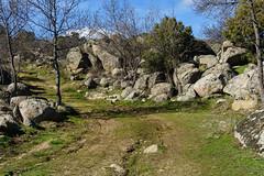 ROCAS (bacasr) Tags: marcha path hicking caminando nature walking comunidaddemadrid robledodechabela senderismo rocks trees spain rocas robledodechavela way camino trail naturaleza madrid senda árboles españa sendero