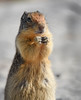 Pleading for a treat (maytag97) Tags: maytag97 nikon d750 tamron 150600 150 600 squirrel ground nature animal outdoors wildlife mammal background closeup wild curious rodent portrait cute pretty one brown looking small funny fur furry upright standing
