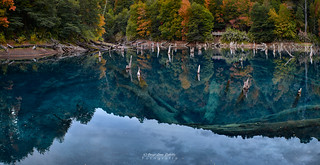 Laguna Arco Iris transparency - Parq. Nac. Conguillio (Norpatagonia Chile)