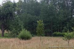 Au verger des Fiestaux (Olivier_1954) Tags: couillet concepts fiestaux motsclésgénériques natureetfaune paysage arbre herbe verger charleroi wallonie belgique be
