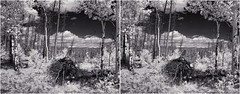 Aspen View (turbguy - pro) Tags: 3d crosseye stereo laramie wyoming infrared medicinebownationalforest