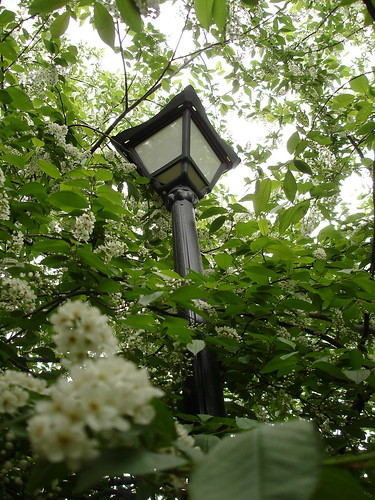Заросший фонарь ©  ayampolsky