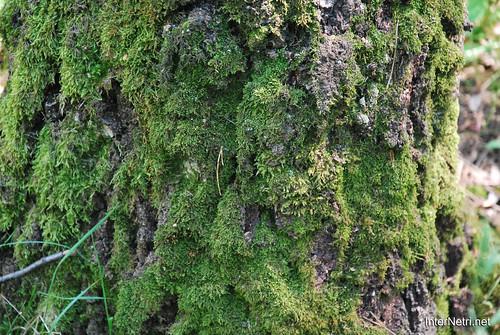 Кора дерева. Лосячий острів.