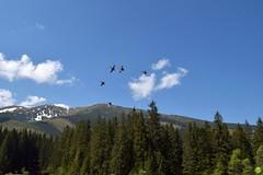 Flying high (petrOlly) Tags: europe europa slowakei slovakia slovensko słowacja sk2018 vrbickémountainlake nature natura przyroda birds bird animals animal landscape