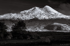 Llaima north face (josemcalvol) Tags: volcano llaima blackwhite conguillionatpark eveninglight chile patagonia ngc