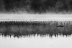 steam (Storm'sEndPhoto) Tags: 2018 anselsiegenthaler pinkjärvi stormsendphotography stormsendphoto aamu aamuvalo dawn finland fog fullframe island järvi lake mist morning morninglight nikon nikonphotography reflections satakunta sunrise suomi water