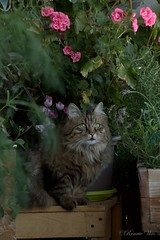 My lovely girl!!! (Renata1109) Tags: katze katzen cat cats outdoor haustier portrait