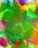 leaf (ldinlove) Tags: leaf abstract color colorful