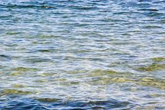 Шацький Національний Природний Парк Озеро Пісочне Прозора вода InterNetri  Ukraine 250