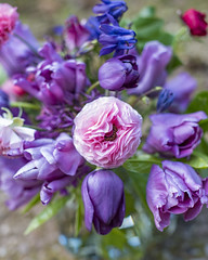Soil and Fleurs British grown flowers (photoart33) Tags: purple pink ranunculus tulips alliums pretty columbines aquilegia beech soft dof homegrown british grownnotflown fleurs soilandfleurs