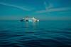 Batman returns...... (Dafydd Penguin) Tags: batman retunrs ferry ship passenger liner boat sea blue water elba italy harbour harbor port leica m10 summarit 35mm f2 asph