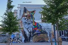 Raposa - Lisboa (cpscoa) Tags: raposa fox bordalo lisboa canon portugal lixo