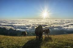 Viviendo el PRESENTE (Jabi Artaraz) Tags: horse yeguas potro pottoka gorbea montaña amanecer niebla sun sol light luz nature sunrise
