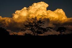 Into the clouds (Rafael C. C. de Souza) Tags: cloud sky tree wild nature landscape trip trakking sunset shadow afternoon canon 500d brazil