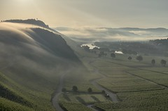 *Osann-Monzel @ Morning in the vineyards* (Albert Wirtz @ Landscape and Nature Photography) Tags: albertwirtz mosel moseltal weinberge riesling vineyards osannmonzel monzel monzelerkätzchen brauneberg mülheimmosel mülheimandermosel moselbrücke bridge nebel dunst morgennebel morgendunst foggy dusty misty nebbia laniebla brouillard brume bruma natur nature natura landscape paesaggi paysages campagne campagna campo morningmood morgenstimmung moselwein mosellewine nikon d810 deutschland germany allemagne rheinlandpfalz rhinelandpalatinate goldenhour goldenestunde moselberge mountains moseleifel eifelmosel wandern hiking moselsteig moselletrail magicmorning morgenzauber
