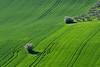 green (luporosso) Tags: natura nature naturaleza naturalmente nikon nikond500 nikonitalia green verde scorcio scorci campagna campi country countryside alberi trees erba grass marche italia italy
