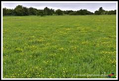 Redhill 09.06.18 (15) (nowboy8) Tags: nikon nikond7200 redhill snipedales lincolnshirewildlifetrust lincolnshire wildlife walk trees