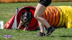 _DSC1077 (SeverX9) Tags: sony alpha 6500 70200gf4 dog run