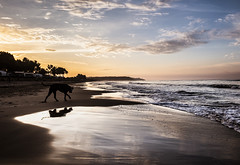 (PepaAston) Tags: dog beach sea water walking landscape seascape sunrise sky backlighting platjallarga tarragona