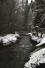 Walk in forest (aureliemourlon) Tags: french france amateur nikon bridge pont foret forest