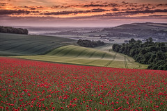 Pre Dawn in Sussex (Eddie Hyde ARPS) Tags: poppies sunrise dawn sussex landscape