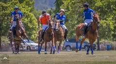 Polo Match #1 (allentimothy1947) Tags: california places sonomacounty ball field goal grass horse lawn mallet oakmont polo rider sports hit pacific united saddle santa rosa sonoma county stregis clubs drive hats jersey uniforms whip
