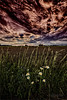 18-06-18_tstory-128web (Timothy Story) Tags: agriculture architecture barn buildings canada clouds crops documentary environment exterior farming fields hamiltondistrict handofman niksoftware northamerica ontario photograph plants scenery spring stoneycreek structures sunset trees vertical westregion