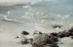 l'appel de la mer.   (the call of the sea) (l'imagerie poétique) Tags: 35mmfilm pentaxmesuper bokeh bretagne plume feather poeticimagery annesilver vacances vacation believeinfilm filmisnotdead