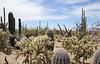 Saguaro Nat'l Park - Mountain District - 2018 (tonopah06) Tags: saguaronationalpark saguaro cactus cacti az arizona 2018 bajada landscape mountaindistrict westunit perspective infinity desertdiscoverytrail nature trail