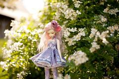 wild roses (koroa) Tags: bjd msd bluefairy doll roses