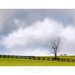 UNDER THE SKY (SOUS LE CIEL) thumbnail