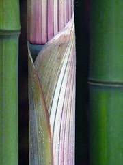 X_P2150712 (Menny Borovski) Tags: natural park wildlife sanctuary rye ny bamboo