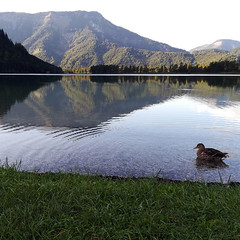 Lago Offensee (Austria)