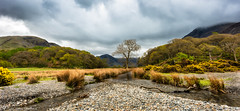 Stream leading into Crummock Water, Cumbria (steve.gombocz) Tags: sceneryshooting simplylandscapes landscapes cumbria westcumbria colour colours color colourmania natureisbeautiful lakedistrictuk lakedistrict out outandabout outdoors landscapephotos landscapephotography landscapephotographs scenery stream beck tree pebbles wood landscapescenes mountain hill fell crag nature ngc natureviews landscapepicture nicelandscapes flickrscenery flickrlandscape explorescenery explorelandscapes clouds nikon nikonusers nikond810 nikoneurope nikoncamera nikonfx nikon140240mmf28 yellow grass green