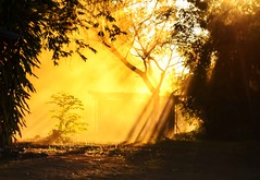 Dust and Light (Rod Waddington) Tags: africa african afrique afrika madagascar malagasy dust sunlight shadow outdoor beams trees building yellow