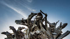El Hierro (Roberto Steinert) Tags: verde el hierro canaryislands islas canarias elhierro landscape paisaje hdr mirador de la peña césarmanrique arbol tree sky cielo wood madera art arte