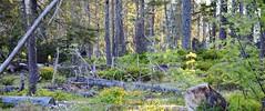 Urwald (Xtraphoto) Tags: landschaft landscape bäume trees bavarianforest bayerischerwald bayern bavaria wald forest urwald
